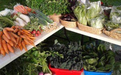 Metung Farmers Market